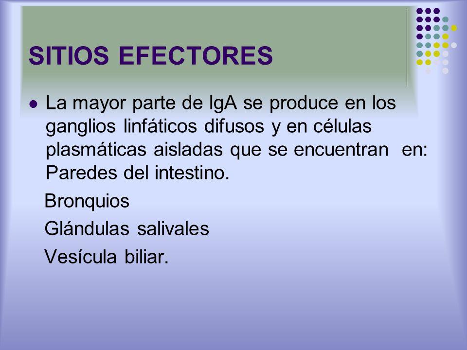 SITIOS EFECTORES