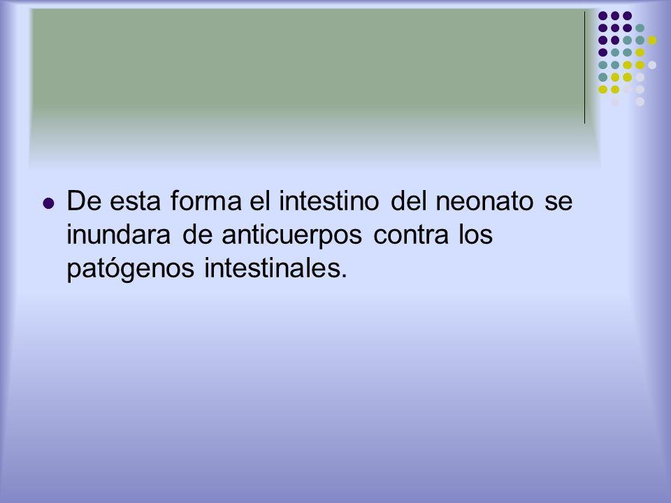 De esta forma el intestino del neonato se inundara de anticuerpos contra los patógenos intestinales.