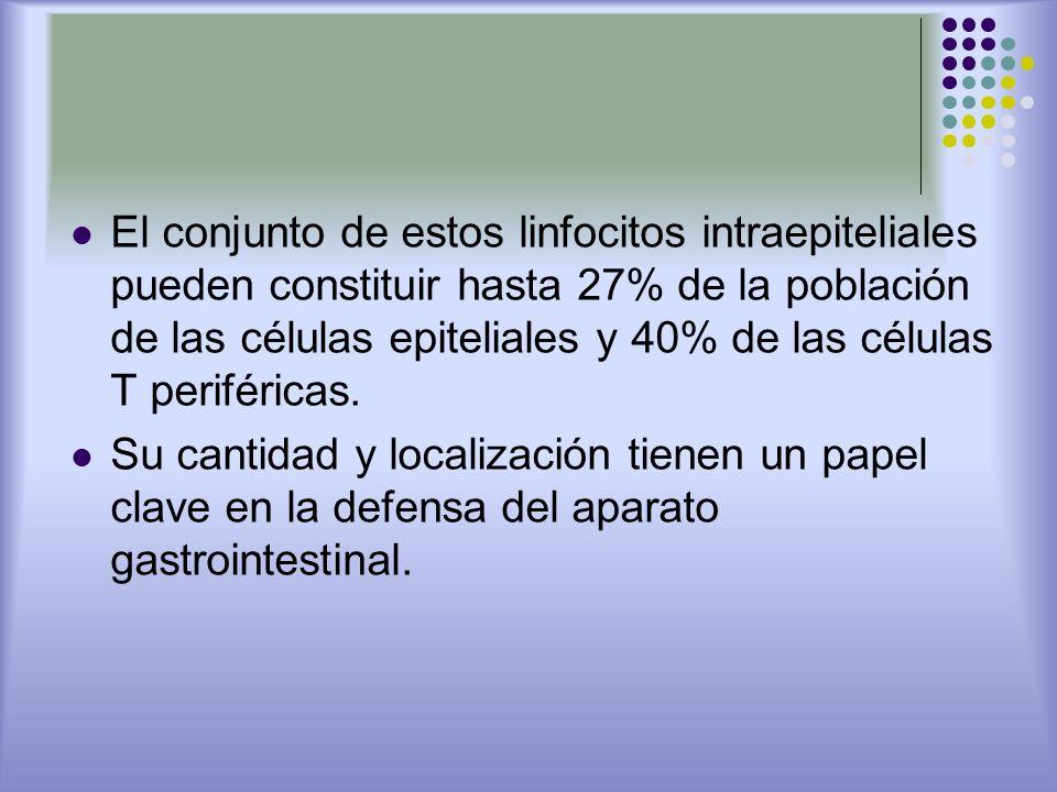 El conjunto de estos linfocitos intraepiteliales pueden constituir hasta 27% de la población de las células epiteliales y 40% de las células T periféricas.