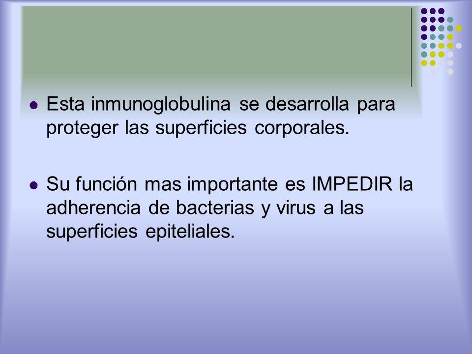 Esta inmunoglobulina se desarrolla para proteger las superficies corporales.