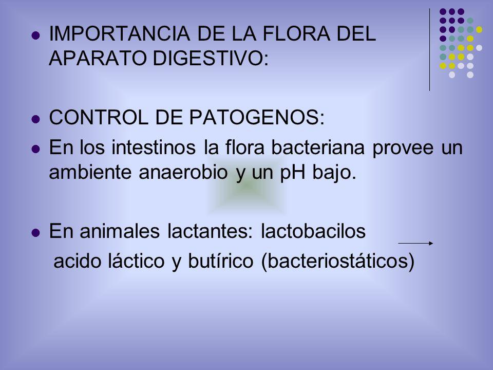 IMPORTANCIA DE LA FLORA DEL APARATO DIGESTIVO: