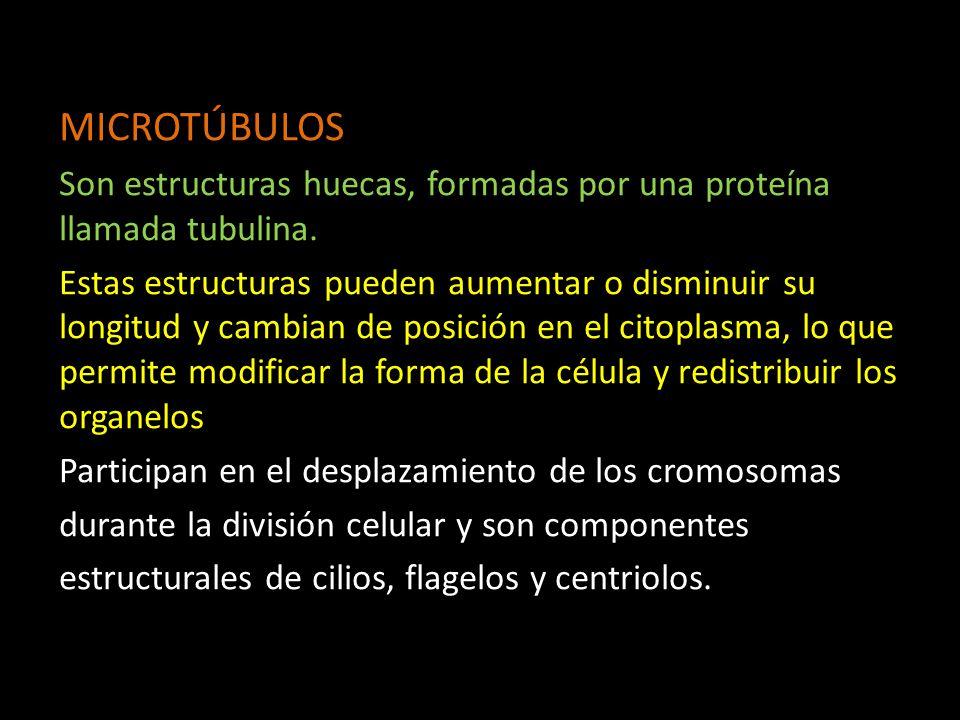 MICROTÚBULOS Son estructuras huecas, formadas por una proteína llamada tubulina.