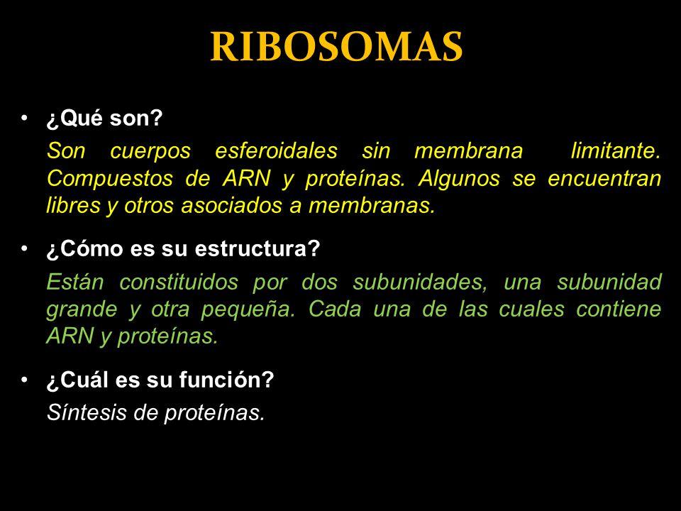 RIBOSOMAS ¿Qué son