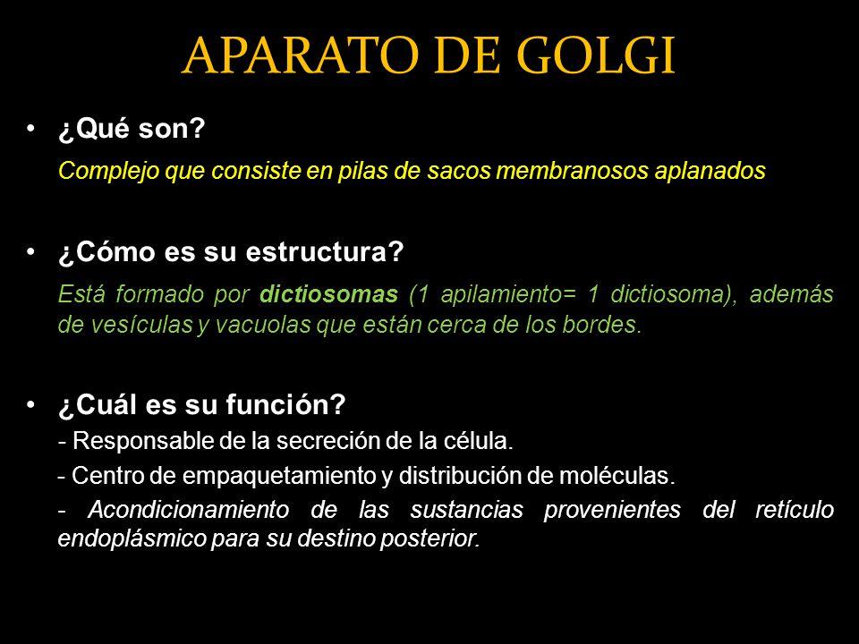 APARATO DE GOLGI ¿Qué son