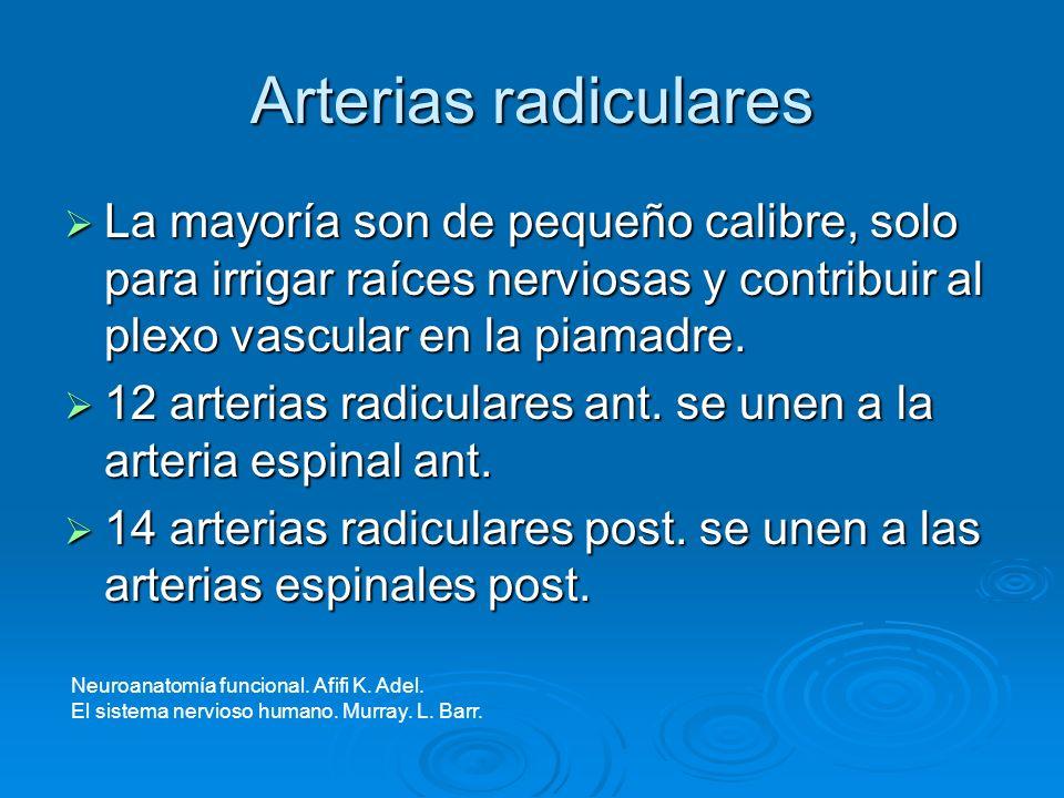 Arterias radiculares La mayoría son de pequeño calibre, solo para irrigar raíces nerviosas y contribuir al plexo vascular en la piamadre.