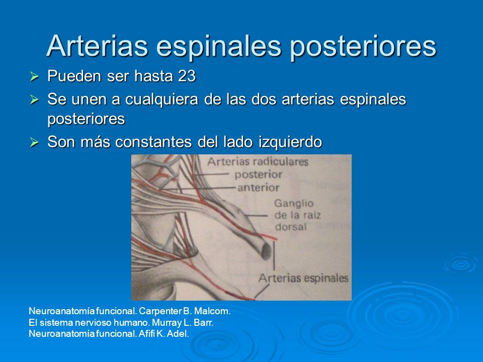 Arterias espinales posteriores