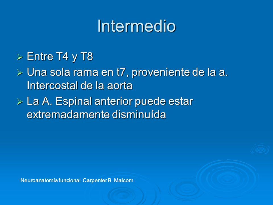 Intermedio Entre T4 y T8. Una sola rama en t7, proveniente de la a. Intercostal de la aorta.