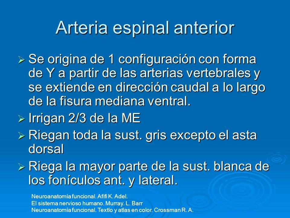 Arteria espinal anterior