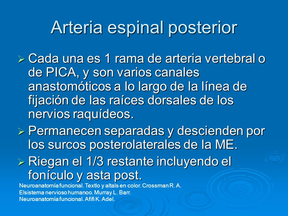 Arteria espinal posterior