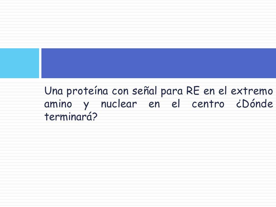 Una proteína con señal para RE en el extremo amino y nuclear en el centro ¿Dónde terminará