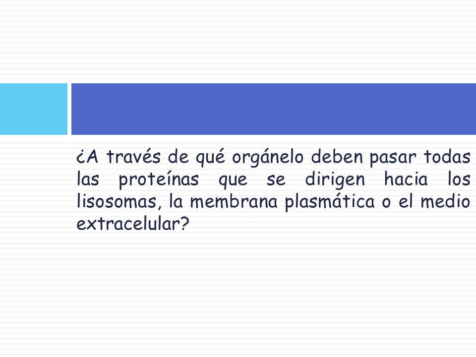 ¿A través de qué orgánelo deben pasar todas las proteínas que se dirigen hacia los lisosomas, la membrana plasmática o el medio extracelular