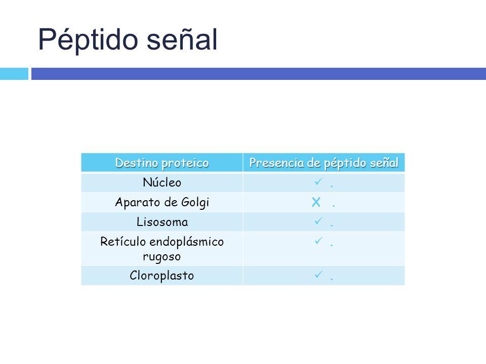 Péptido señal Destino proteico Presencia de péptido señal Núcleo .