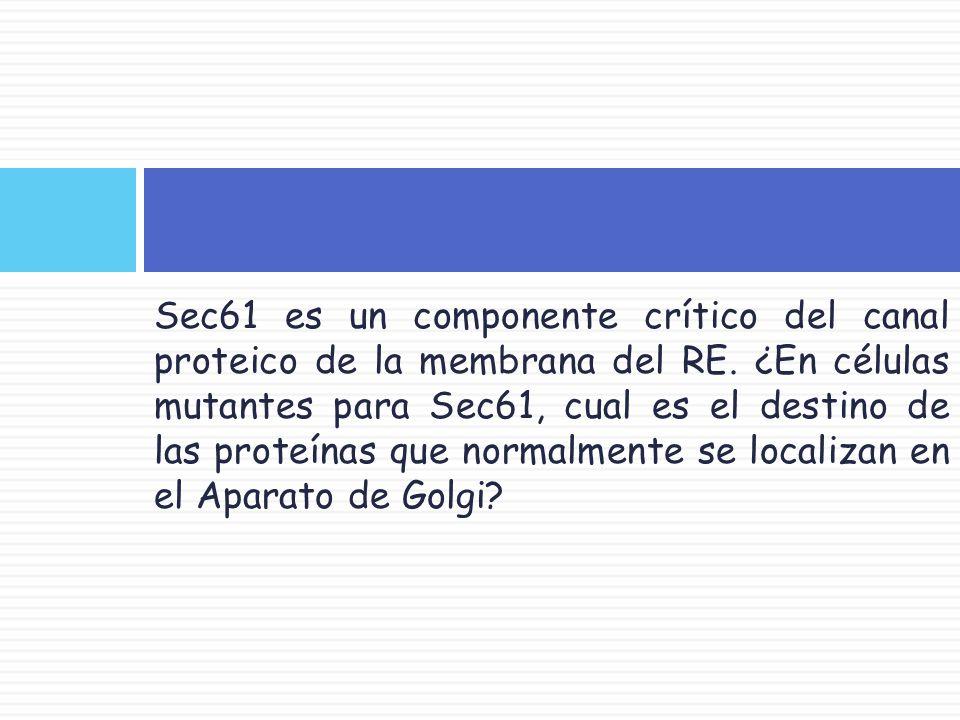 Sec61 es un componente crítico del canal proteico de la membrana del RE.
