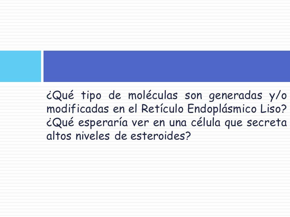 ¿Qué tipo de moléculas son generadas y/o modificadas en el Retículo Endoplásmico Liso.