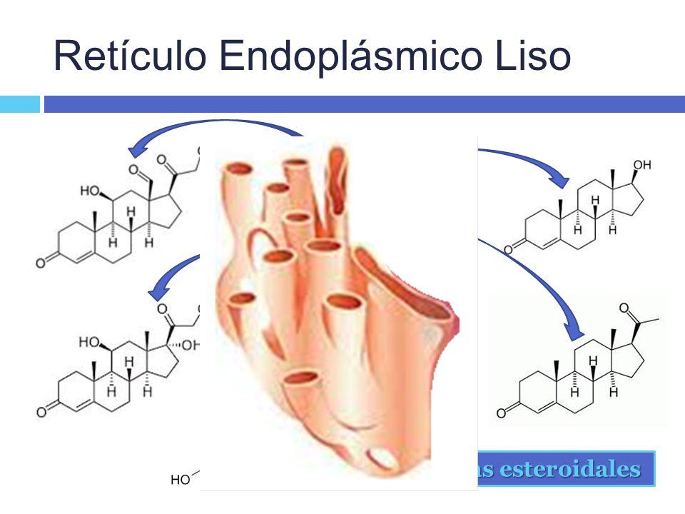 Retículo Endoplásmico Liso