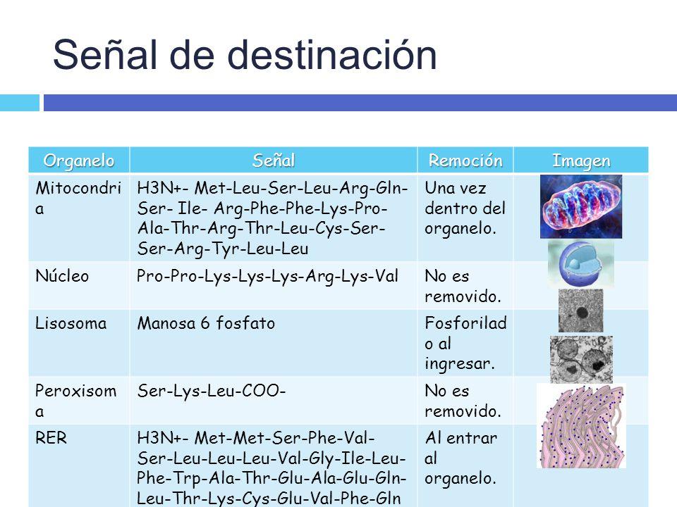 Señal de destinación Organelo Señal Remoción Imagen Mitocondria