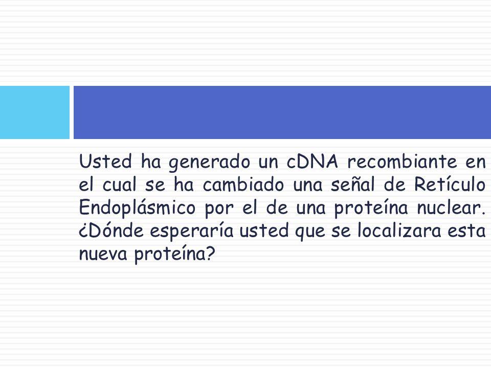 Usted ha generado un cDNA recombiante en el cual se ha cambiado una señal de Retículo Endoplásmico por el de una proteína nuclear.
