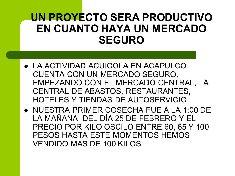 UN PROYECTO SERA PRODUCTIVO EN CUANTO HAYA UN MERCADO SEGURO