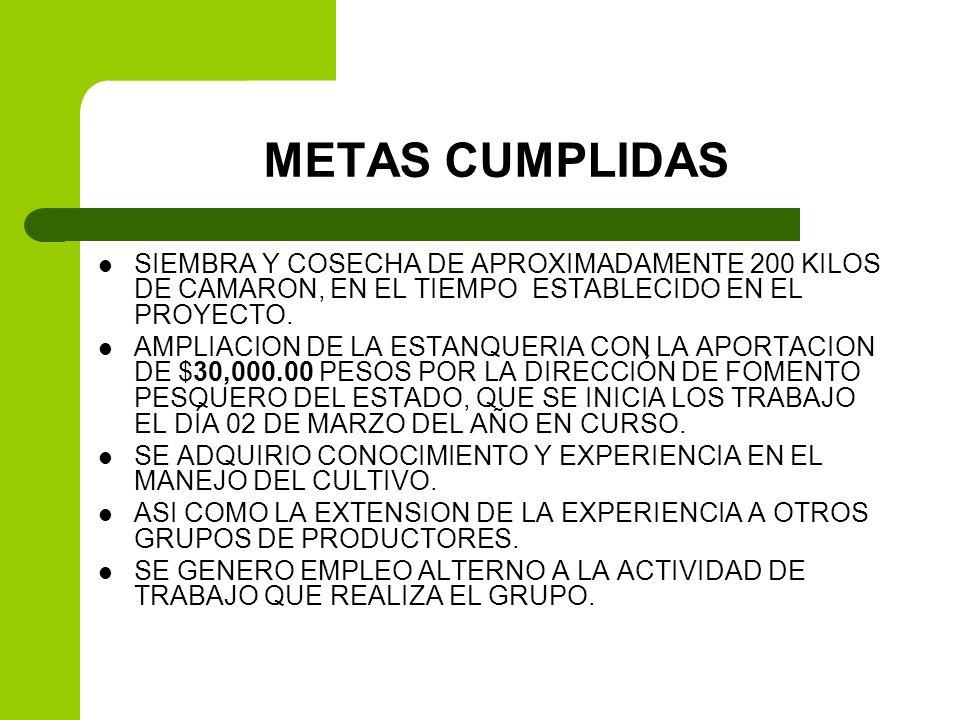 METAS CUMPLIDASSIEMBRA Y COSECHA DE APROXIMADAMENTE 200 KILOS DE CAMARON, EN EL TIEMPO ESTABLECIDO EN EL PROYECTO.