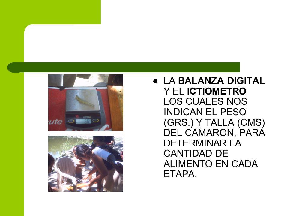 LA BALANZA DIGITAL Y EL ICTIOMETRO LOS CUALES NOS INDICAN EL PESO (GRS