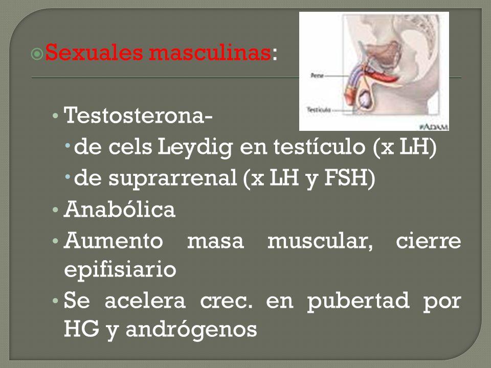 Sexuales masculinas: Testosterona- de cels Leydig en testículo (x LH) de suprarrenal (x LH y FSH)