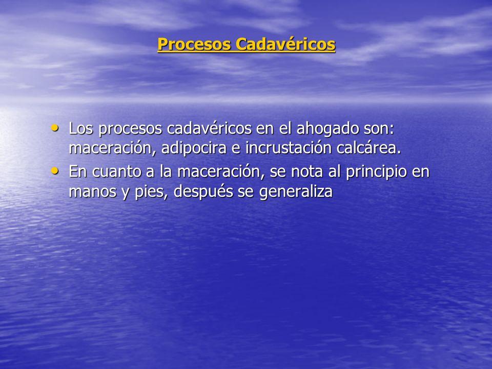 Procesos Cadavéricos Los procesos cadavéricos en el ahogado son: maceración, adipocira e incrustación calcárea.