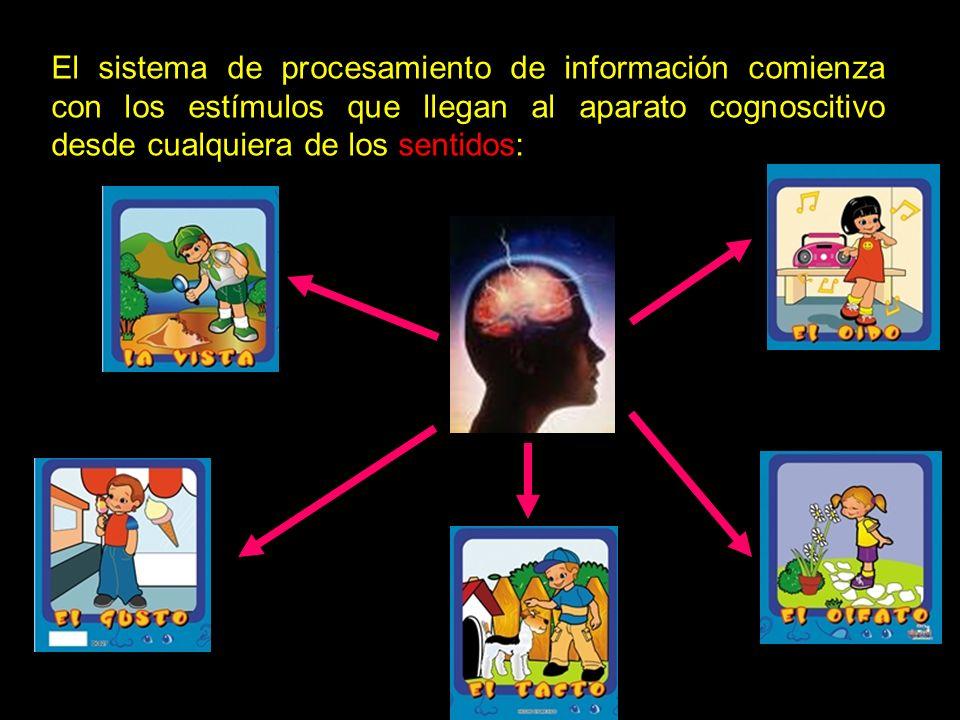 El sistema de procesamiento de información comienza con los estímulos que llegan al aparato cognoscitivo desde cualquiera de los sentidos: