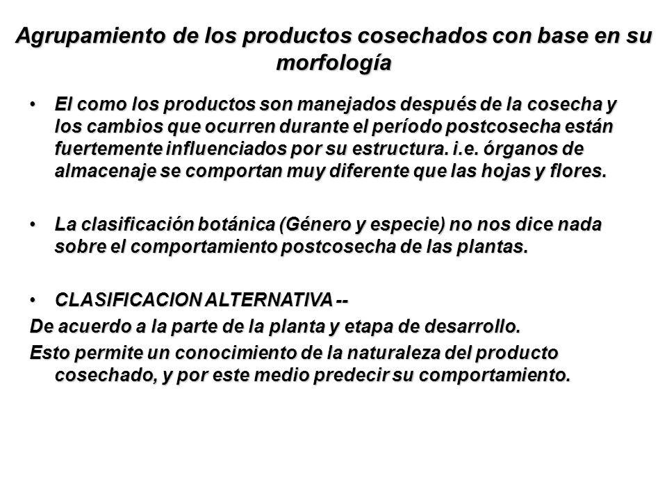 Agrupamiento de los productos cosechados con base en su morfología