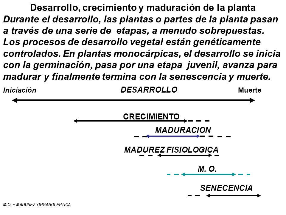 Desarrollo, crecimiento y maduración de la planta