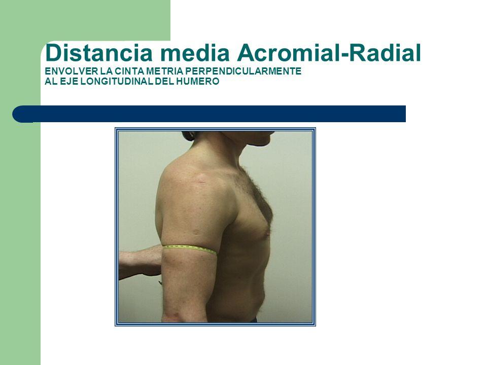 Distancia media Acromial-Radial ENVOLVER LA CINTA METRIA PERPENDICULARMENTE AL EJE LONGITUDINAL DEL HUMERO