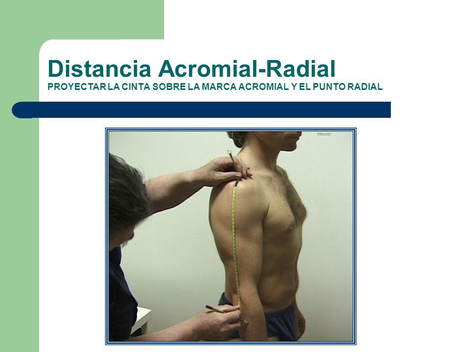 Distancia Acromial-Radial PROYECTAR LA CINTA SOBRE LA MARCA ACROMIAL Y EL PUNTO RADIAL