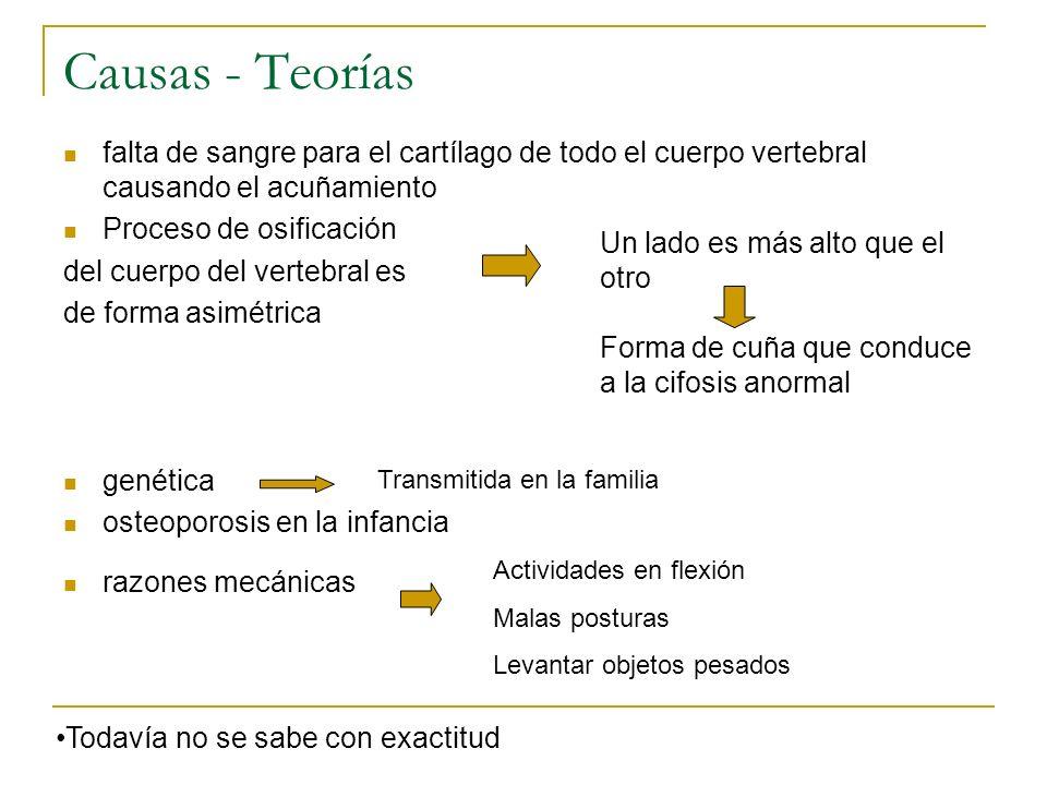 Causas - Teorías falta de sangre para el cartílago de todo el cuerpo vertebral causando el acuñamiento.