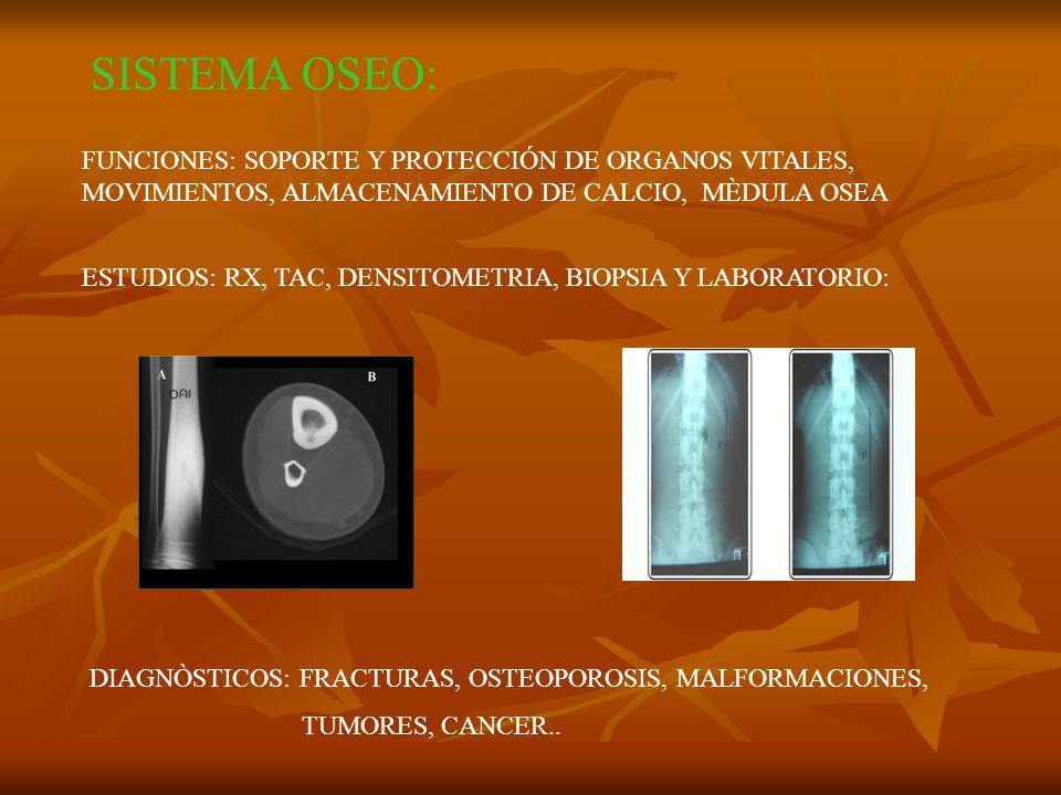 SISTEMA OSEO: FUNCIONES: SOPORTE Y PROTECCIÓN DE ORGANOS VITALES, MOVIMIENTOS, ALMACENAMIENTO DE CALCIO, MÈDULA OSEA.