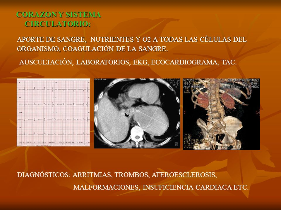 CORAZON Y SISTEMA CIRCULATORIO: