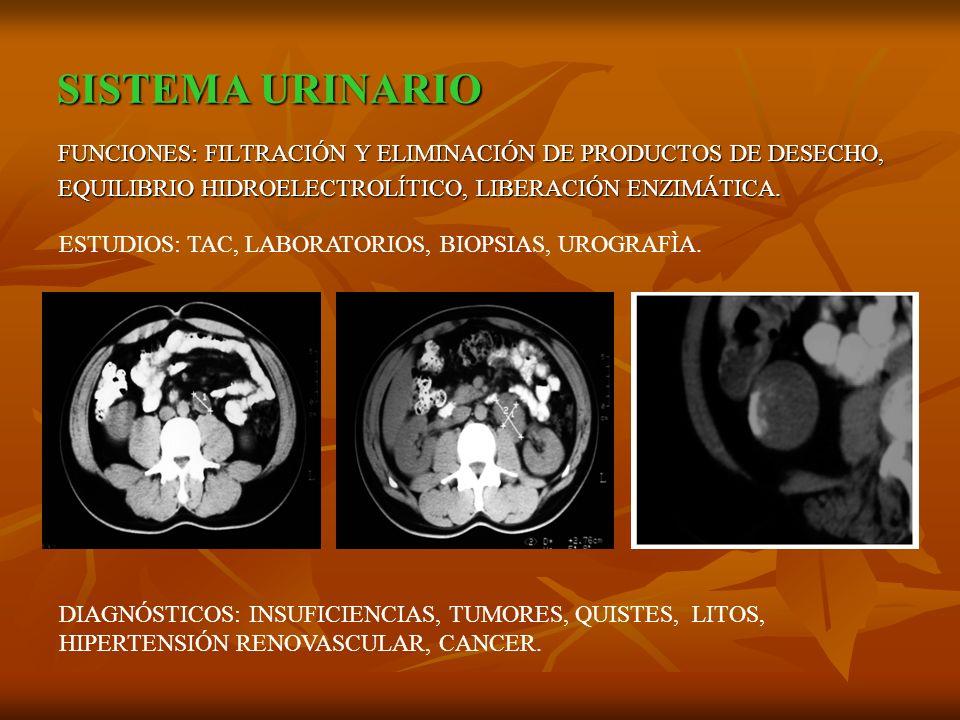 SISTEMA URINARIO FUNCIONES: FILTRACIÓN Y ELIMINACIÓN DE PRODUCTOS DE DESECHO, EQUILIBRIO HIDROELECTROLÍTICO, LIBERACIÓN ENZIMÁTICA.