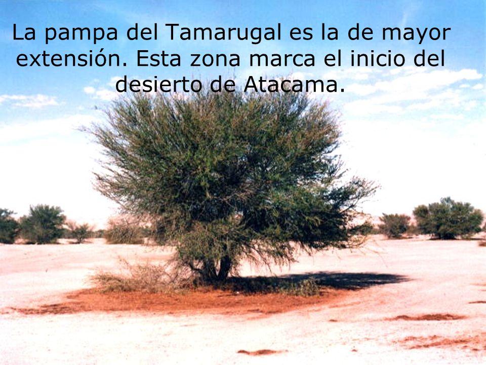 La pampa del Tamarugal es la de mayor extensión