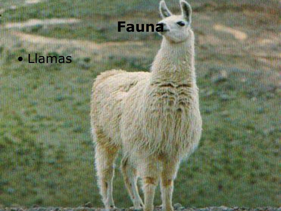 Fauna Llamas