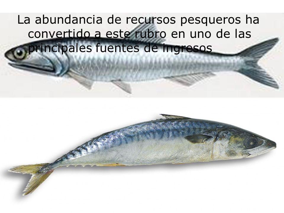 La abundancia de recursos pesqueros ha convertido a este rubro en uno de las principales fuentes de ingresos