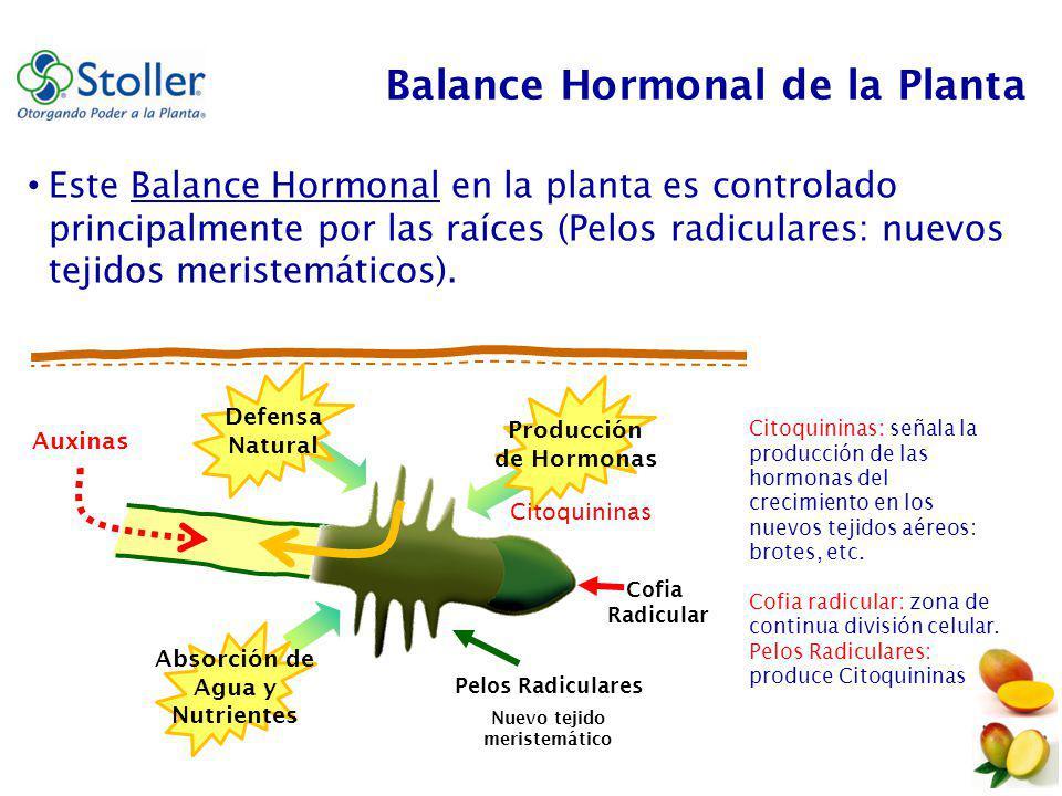 Manejo hormonal para la inducci n floral en mango de for Hormonas en las plantas