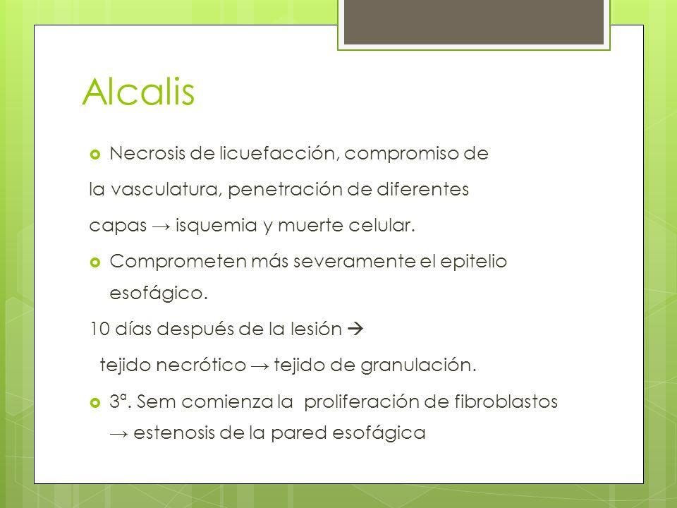 Alcalis Necrosis de licuefacción, compromiso de