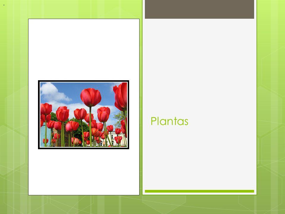 . Plantas