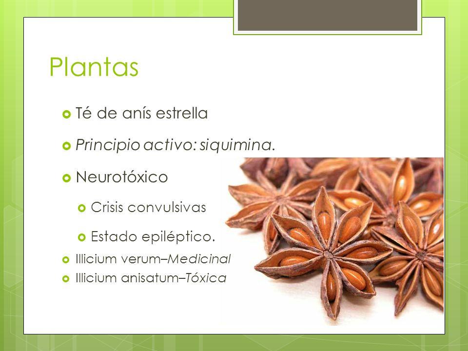 Plantas Té de anís estrella Principio activo: siquimina. Neurotóxico