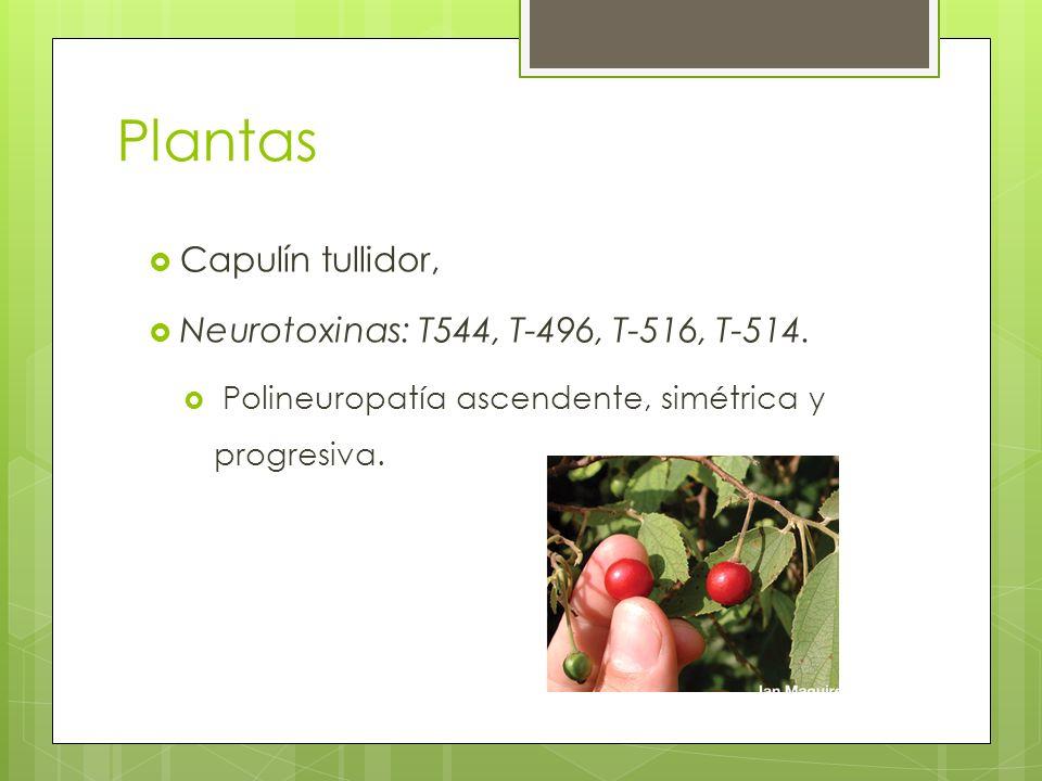 Plantas Capulín tullidor, Neurotoxinas: T544, T-496, T-516, T-514.