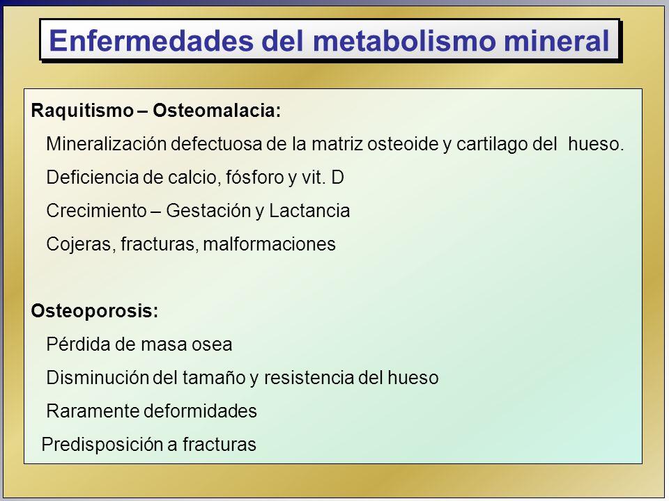 Enfermedades del metabolismo mineral