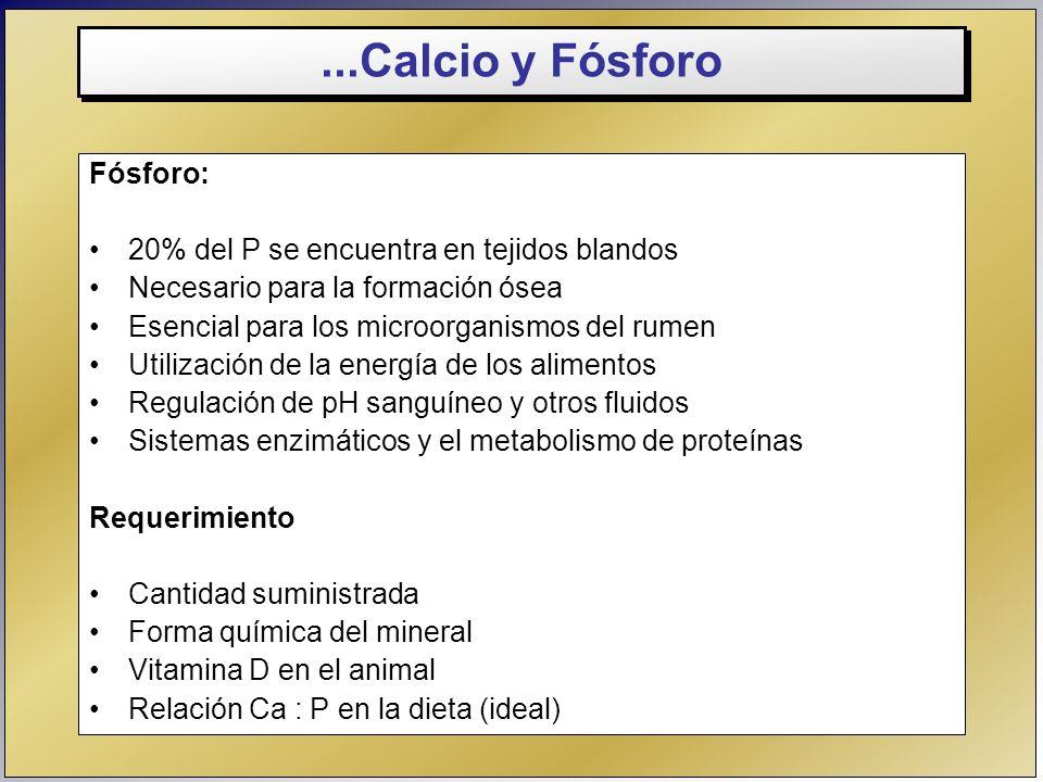 ...Calcio y Fósforo Fósforo: 20% del P se encuentra en tejidos blandos