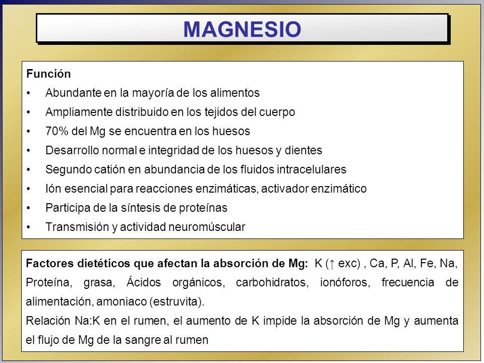 MAGNESIO Función Abundante en la mayoría de los alimentos