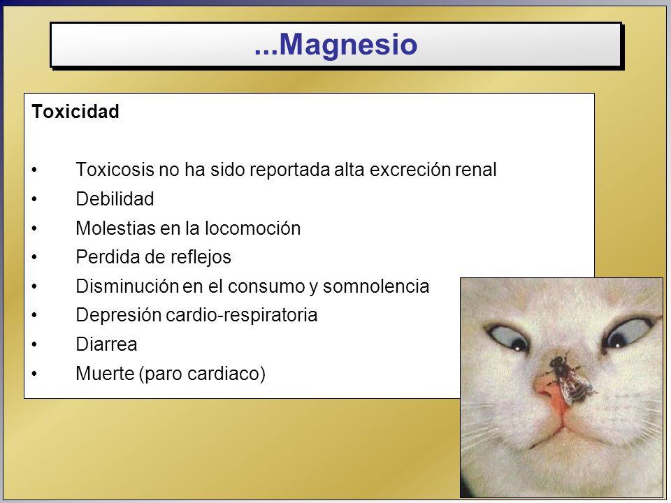 ...Magnesio Toxicidad. Toxicosis no ha sido reportada alta excreción renal. Debilidad. Molestias en la locomoción.