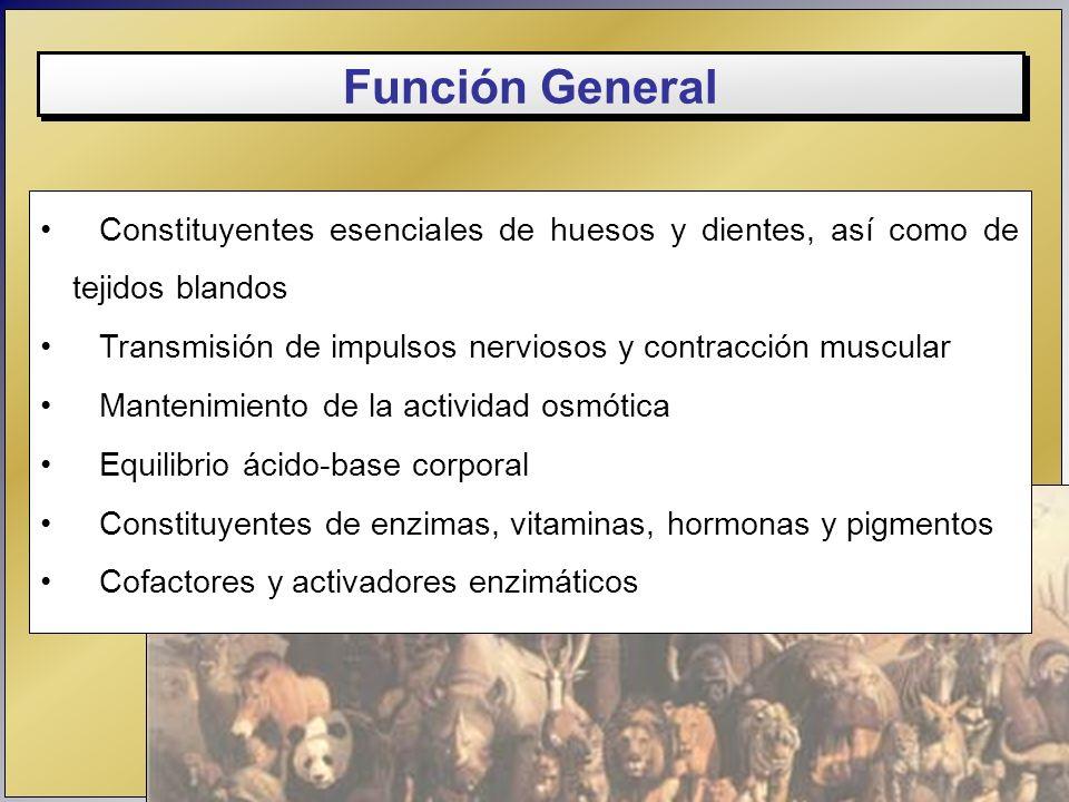 Función General Constituyentes esenciales de huesos y dientes, así como de tejidos blandos. Transmisión de impulsos nerviosos y contracción muscular.