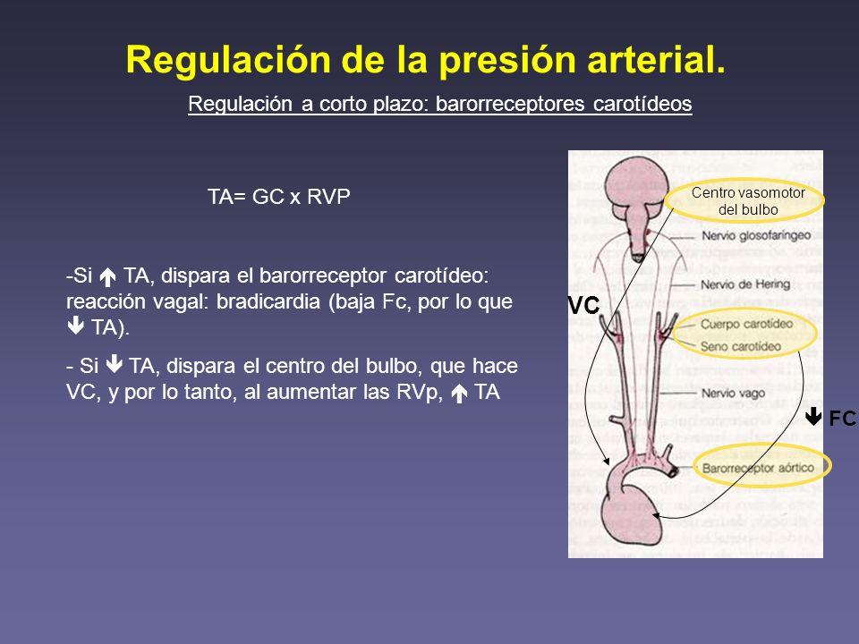 Regulación de la presión arterial.