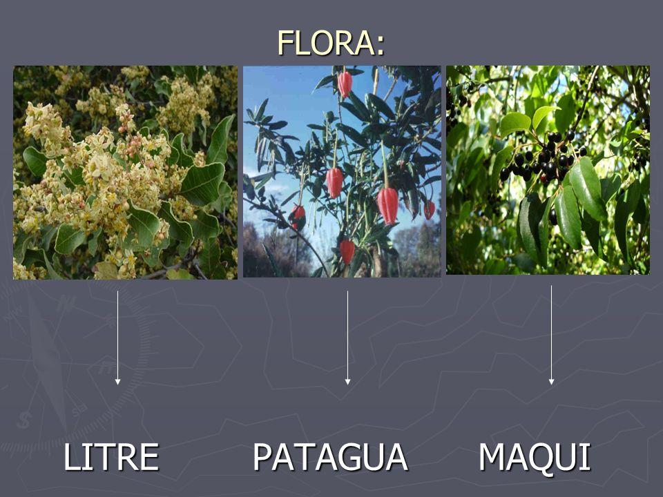 FLORA: LITRE PATAGUA MAQUI